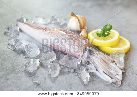 Raw Squid On Ice With Salad Spices Lemon Garlic On White Plate Background / Fresh Squids Octopus Or