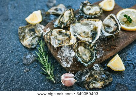 Fresh Oysters Seafood On Wooden Board Plate Background / Open Oyster Shell With Herb Spices Lemon Ro