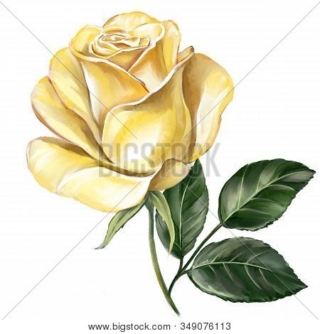 Flower Rose Yellow With Green Leaves, Art Illustration Painted With Watercolors Isolated On White Ba