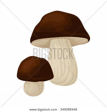 Raw Uncooked Mushroom Isolated On White Background Vector Food Item