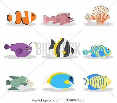 Exotic Ocean Fish Flat Vector Illustrations Set. Tropical Deep Water Wildlife, Sea Life Pack. Clownf