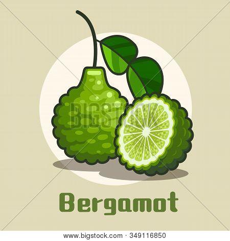 Fresh Bergamot Fruit With Half Circle Slice Of Bergamot Modern Flat Design. Vector Illustration