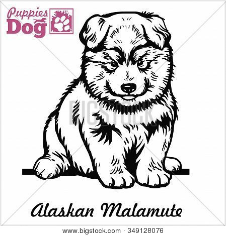 Alaskan Malamute Puppy Sitting. Drawing By Hand, Sketch. Engraving Style, Black And White Vector Ima