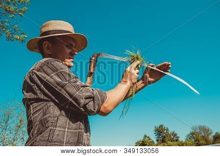 Authentic Rural Farmer In Straw Hat Clean Scythe With Grass. Agriculture Worker. Sharp Blade. Vegeta
