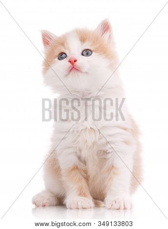 Cat, Pet, And Cute Concept - Kitten On A White Background.
