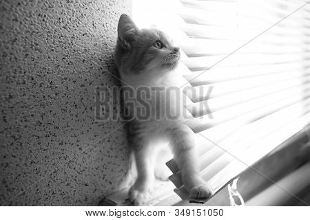 Lovely Cat Play In Horizontal Metal Jalousie. Bw Photo.