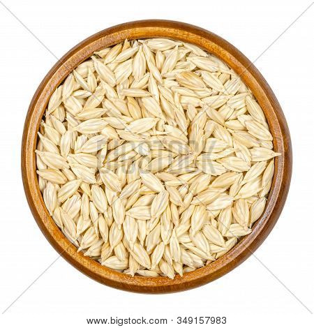 Spelt Grains, Seeds With Outer Husk In Wooden Bowl. Dinkel Or Hulled Wheat, Triticum Dicoccum. Cerea