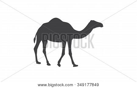 Silhouette Of Camel. Dromedary, One - Humped Camel.