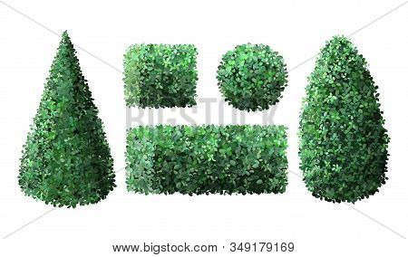 Realistic Garden Bushes. Topiary Boxwood Gardener Evergreen Fence With Leaves, Geometric Tree Crown