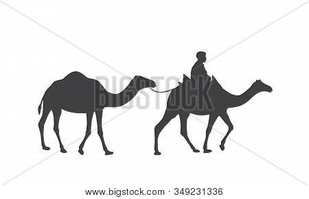 Silhouette Of A Caravan Of Camels And A Drover In The Saddle. Dromedary, One-humped Camels And Bedou