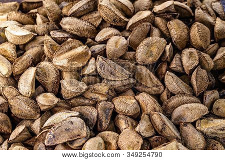 Brazil Nuts, Amazon Nuts, Acre Nuts, Brazil Nuts, Amazon Nuts, Bolivian Nuts, Toquei Or Tururi, Very