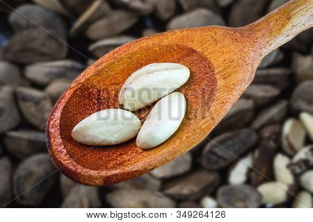 Brazil Nut, Brazilian Chestnut Seed, A Delicacy From The Amazon Grown In Brazil And Bolivia. Known A
