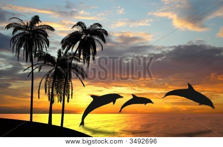 Dolphins Near Hawaii