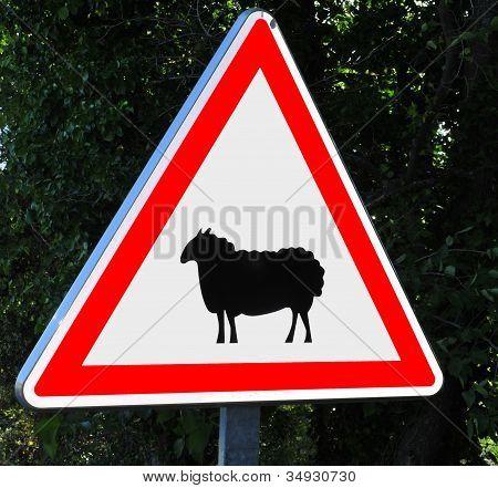 Beware of the sheep