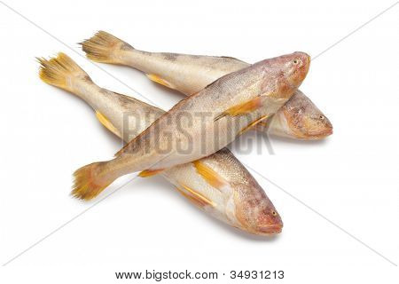 Fresh raw butterfishes on white background