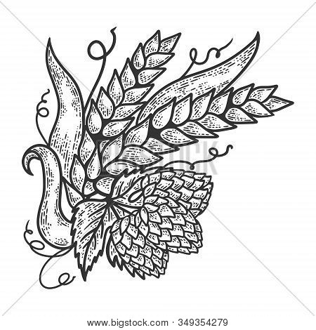 Hops And Barley Plant Engraving Sketch Vector Illustration. Scratch Board Style Imitation. Black And