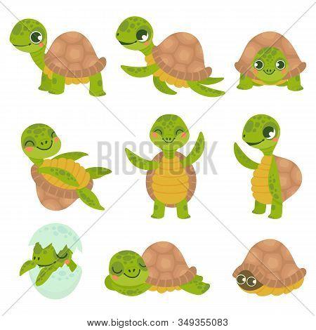 Cartoon Smiling Turtle. Funny Little Turtles, Walking And Swim Tortoise Animals Vector Set. Collecti