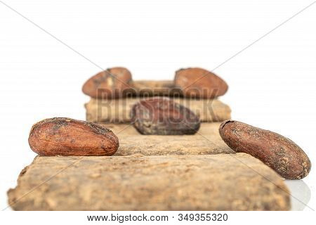 Group Of Five Whole Fresh Brown Cocoa Bean With Cocoa Butter Isolated On White Background
