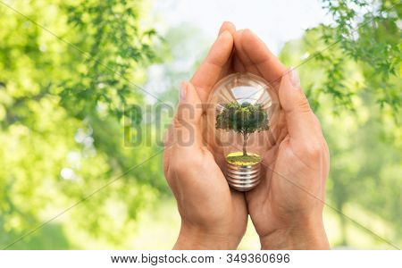 conservation, environment and ecology concept - close up of hands holding lightbulb with tree inside over green natural background