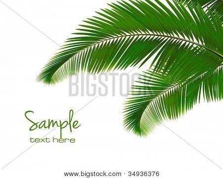 Palmového listí na bílém pozadí. Vektor.