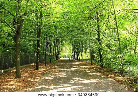 Summer Park With Pathway Between Green Trees. Summer Landscape With City Park. Trees In Green Foliag