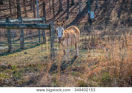 A Cute And Friendly Multicolored Donkey Behind A Barbwire Fence In A Field Looking Interested With T