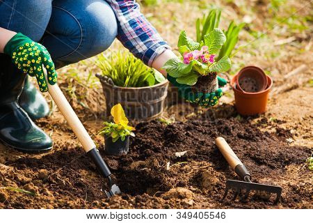 Gardener Planting Flowers In Soil At Back Yard