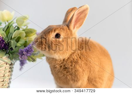 Rufus Bunny Rabbit In Easter Spring Setting With Soft Simple Background