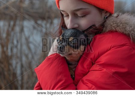 Small Chihuahua Dog Is Heated Under The Mistresss Jacket. Closeup Shot. Girl In A Winter Jacket And