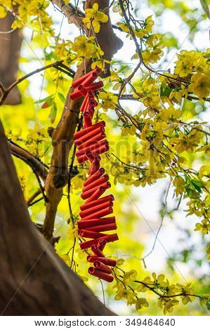 Red Firecrackers Hanging On Yellow Apricot Blossom Tree- Tet Holiday