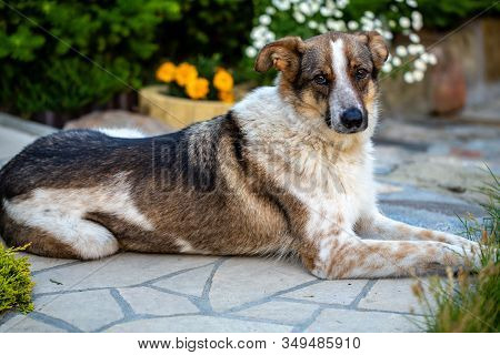 The Homeless Mutt Clasped From The Animal Shelter