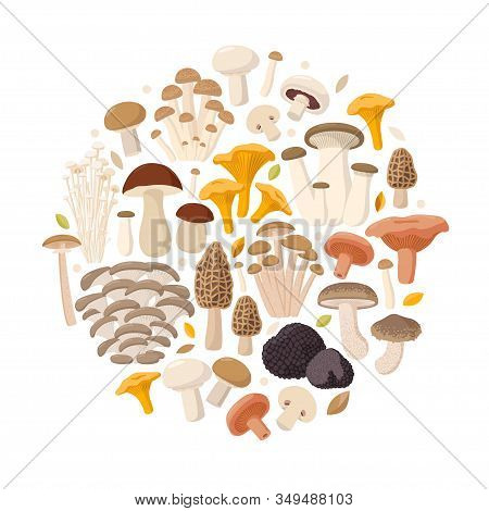 Mushrooms Collection Of Vector Flat Illustrations Isolated On White In Round. Cep, Chanterelle, Hone