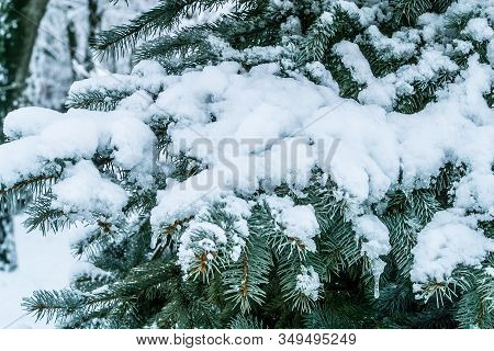 Branch Of A Firtree Covered With Snow. Winter Landscape For Postcards Or Backdrop. The Photo Can Be