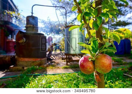 Ripe, Mature Red Apple In Front Of Domestic Production, Homemade Distillery Made Of Copper, Making M