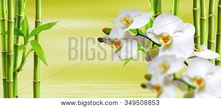 Spa Background With Ochideen And Bamboo In Green