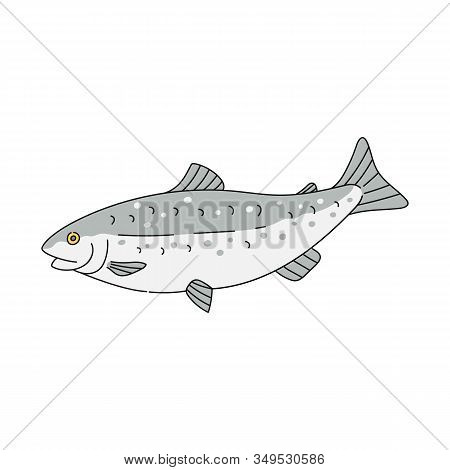 Grey Trout Fish Drawing Isolated On White Background - Hand Drawn Sea Animal