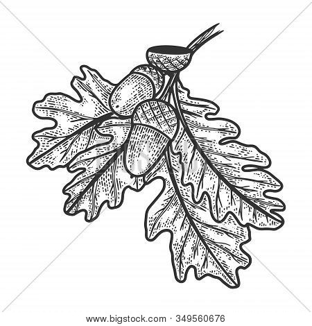 Oak Branch With Acorns Sketch Engraving Vector Illustration. T-shirt Apparel Print Design. Scratch B