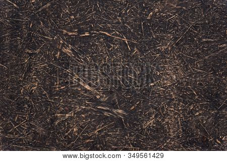 Texture Of Old Wood Background Abstract Surface. Chipboard Material. Osb Boards.
