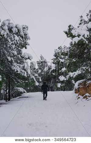 Man In A Coat Walks Through A Snowy Forest. Nature And Lifestyle Concept.
