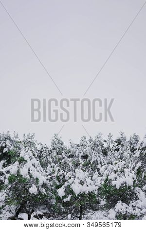 Snowy Pine Treetops With Cloudy Skies. Nature And Winter Concept