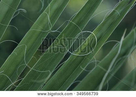 Blurred Floral Background.beautiful Texture Of Palm Leaves.green Natural Background.horizontal, Clos