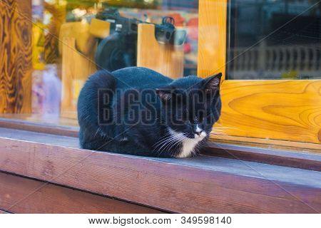 Kadikoy Street Cat 4
