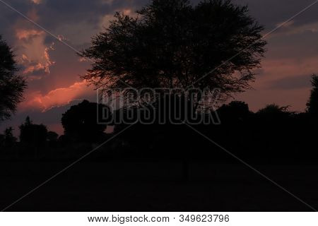 Silhouette Images Of Green Trees In Sunsets On Landscape With Sun, And Purple And Red Clouds Backgro