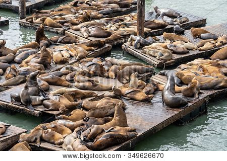 Pier 39 In San Francisco With Sea Lions.