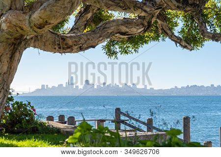 San Francisco Skyline Seen From Sausalito Garden