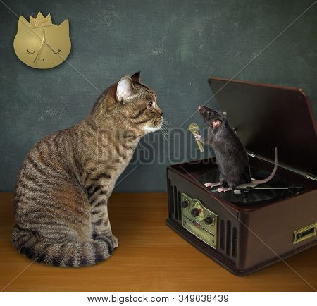 The Beige Cat Is Sitting Near A Turntable Vinyl Record Player With A Radio  Tuner. The Black Rat Wit
