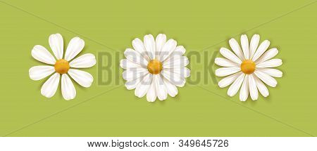 Set Of White Daisy Chamomile Illustration. Cute Realistic Flower Plant Icon Collection. Different So