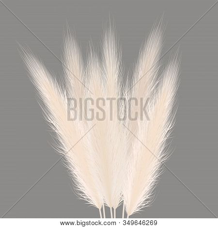 Pampas Golden Grass Sheaf On Grey. Vector Illustration. Panicle Cortaderia Selloana Bouquet South Am
