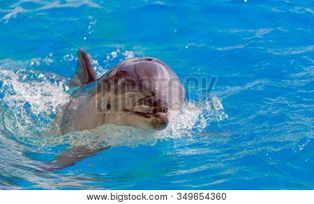 Close Up Of A Bottlenose Dolphin Looking.