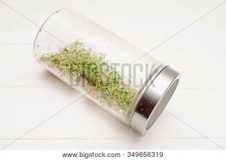 Glass Jar With A Metal Lid And Sieve, For Microgreen, Young Sprouts Of Radish, Lucerne, Fenugreek Pl